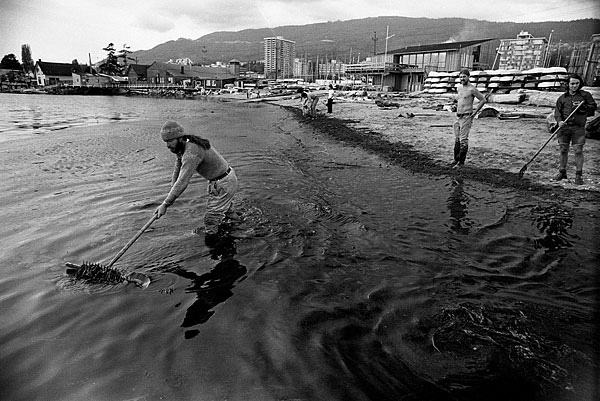 Volunteers cleaning Ambleside Beach in West Vancouver, 1973. Source: John Denniston (johndenniston.ca).